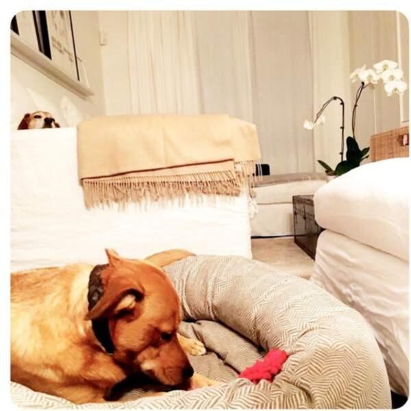 Dans son sweet home, ses deux Beagles, Guy et Bogart font la loi