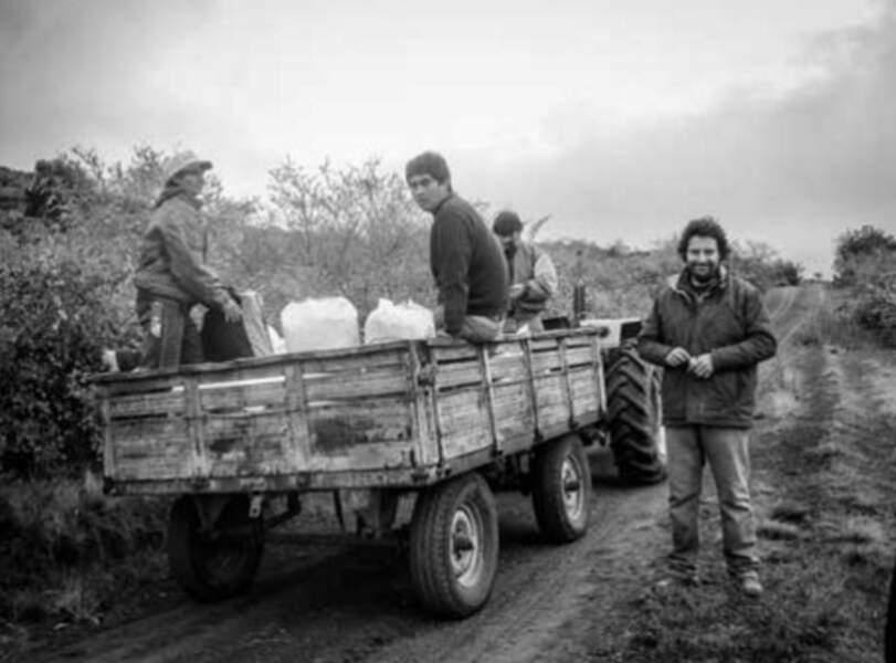 Travail des ouvriers lors de la récolte pour la fabrication des soins Rosazucena