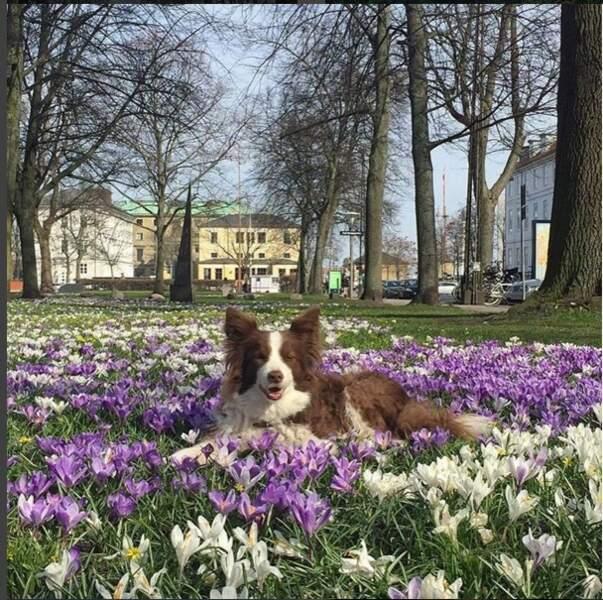 Ziggy, quelques jours avant sa mort, dans le jardin du château familial