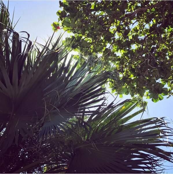 La végétation luxuriante