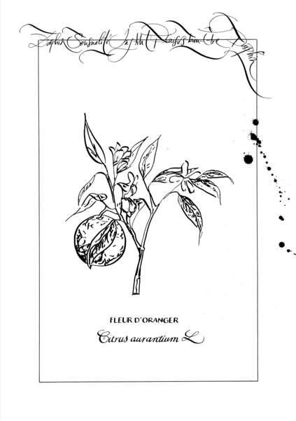 La Fleur d'oranger, Herbier, Nicolas Ouchenir pour Darphin