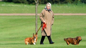 PHOTOS – Fiancée au prince Harry, Meghan Markle peut dire merci aux corgis d'Elisabeth II!