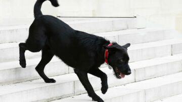 Némo, le chien d'Emmanuel Macron assure ne pas avoir uriné sur le parquet de l'Elysée: l'interview WTF de Paris Match