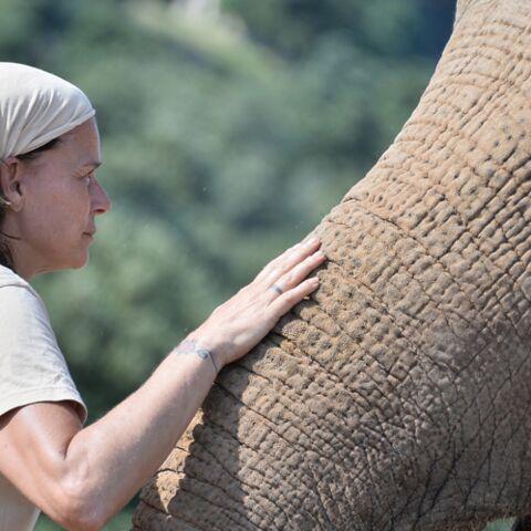 Stéphanie de Monaco: comment son combat pour les éléphants a changé sa vie
