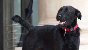 La directrice de la SPA d'où vient Nemo, le chien du couple Macron, bientôt licenciée?