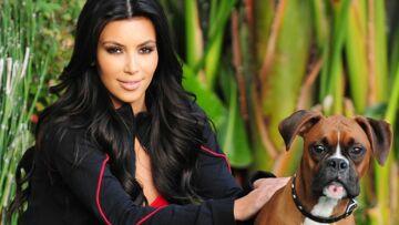Kim Kardashian a fait greffer de faux testicules à son chien, l'info insolite du jour!