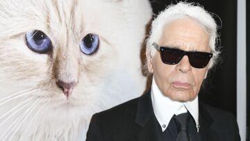 """PHOTO – L'hommage de Choupette à son """"papa"""" Karl Lagerfeld"""
