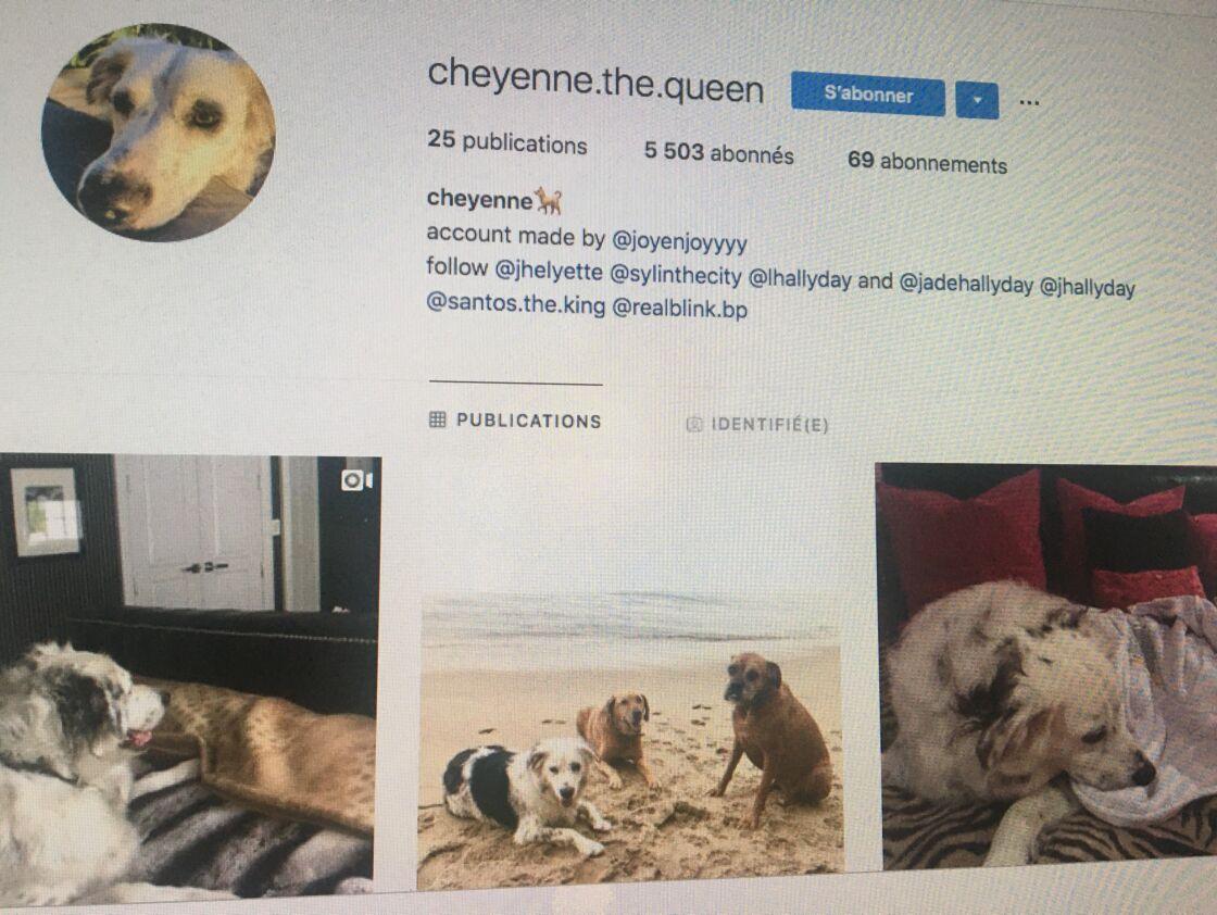 C'est le compte Instagram publique de la chienne Cheyenne, longtemps fièrement tenu par Joy, qui stipule la nouvelle identité de Joy sur le réseau social