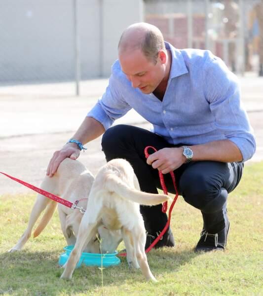 Le prince William avec un chien d'identification des explosifs