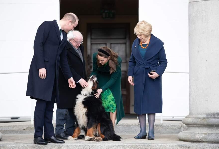 Véritable mascotte de l'Irlande, Brod est l'un des deux chiens du président. La duchesse Kate de Cambridge s'est également éprise de l'animal le 3 mars 2020 à la résidence présidentielle officielle Aras an Uachtarain à Dublin.