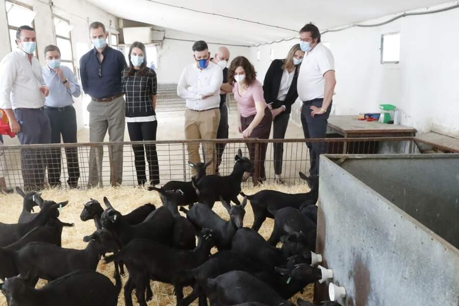 Le roi Felipe VI et la reine Letizia d'Espagne ont visité ce 3 juin 2020 une ferme près de Madrid pendant l'épidémie de Covid-19. Ils portaient tous les deux un masque de protection.
