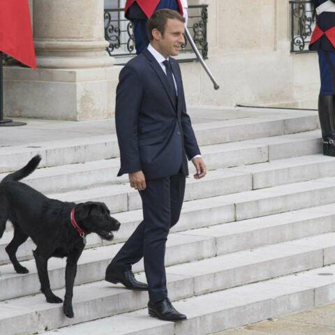 Emmanuel et Brigitte Macron: Nemo, ce fidèle compagnon qui sert d'exemple