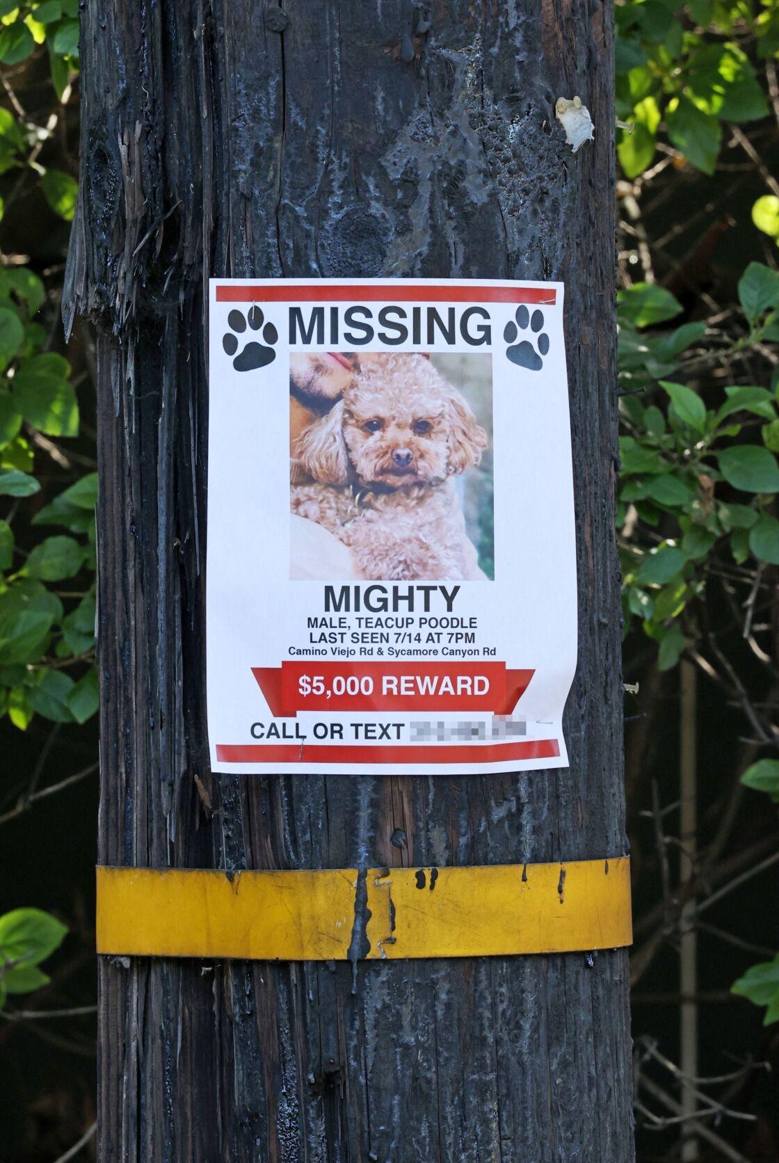 L'avis de recherche qui a été placardé dans les rues de Los Angeles, suite à la disparition de Mighty, le caniche d'Orlando Bloom et de Katy Perry.
