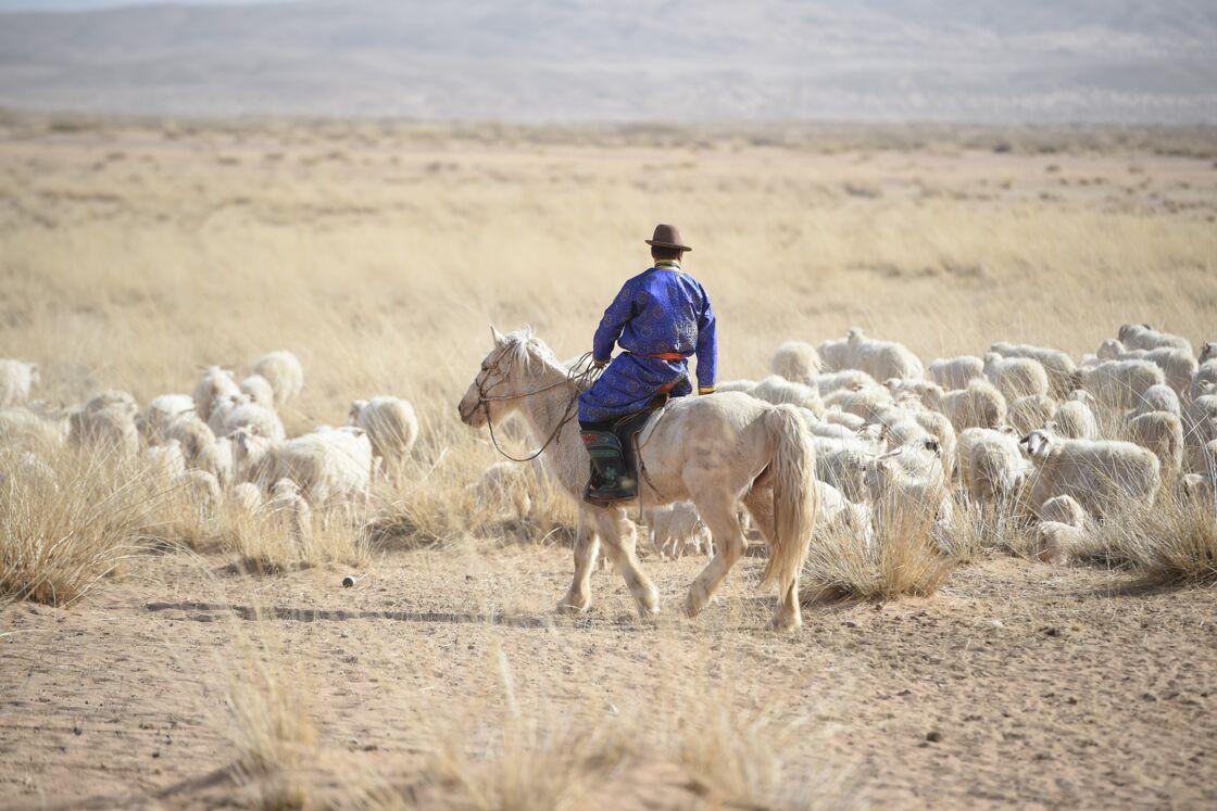 Les matières premières de Notshy proviennent des hauts plateaux de Mongolie.