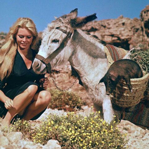 Brigitte Bardot, coquillages et marcassins