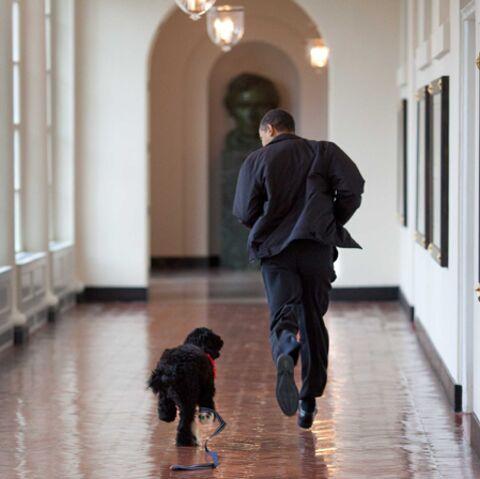 Bo Obama: en vente au rayon jouets