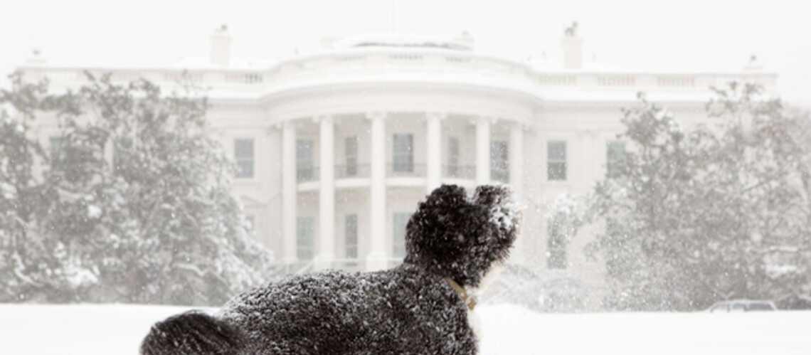 Bo Obama sème la honte à la Maison Blanche