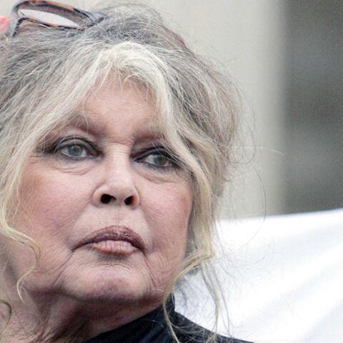 Brigitte Bardot a perdu son chat