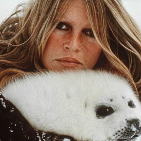 Brigitte Bardot, la complainte du phoque à Obama