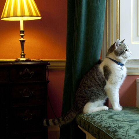 Larry: le nouveau king de Downing Street