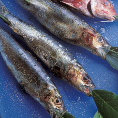 Sardines et rougets grillés
