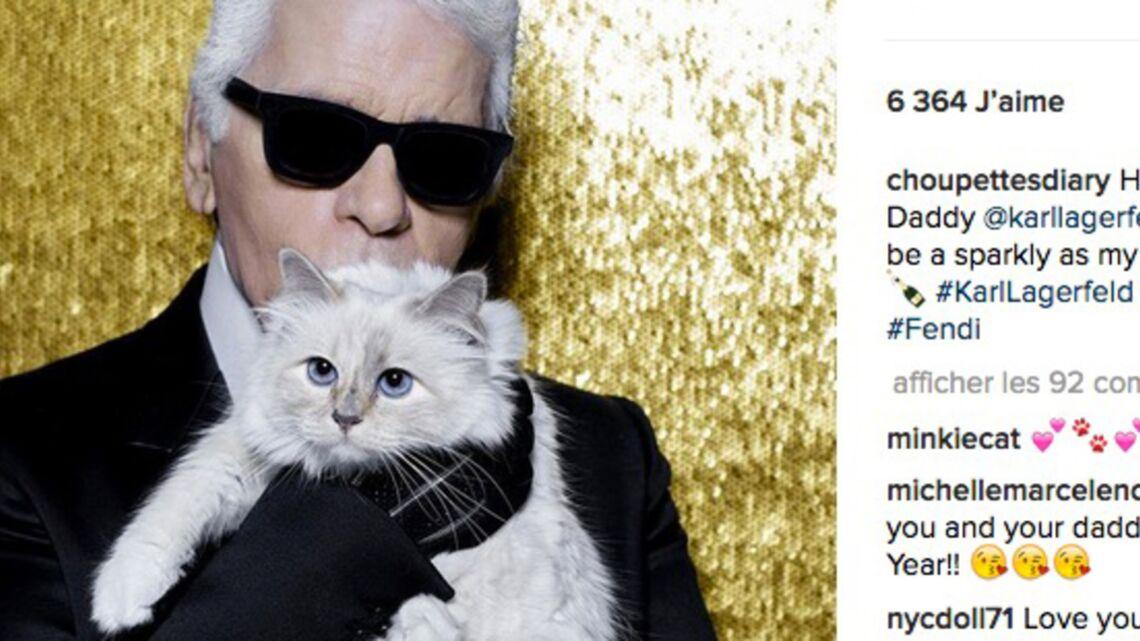 VIDEO- De Karl Lagerfeld à Laure Manaudou: tous fous de leurs chats