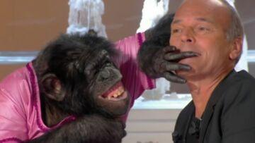 VIDEO – Laurent Baffie arrive avec un singe sur le plateau de Thierry Ardisson, grosse frayeur pour Robert Charlebois