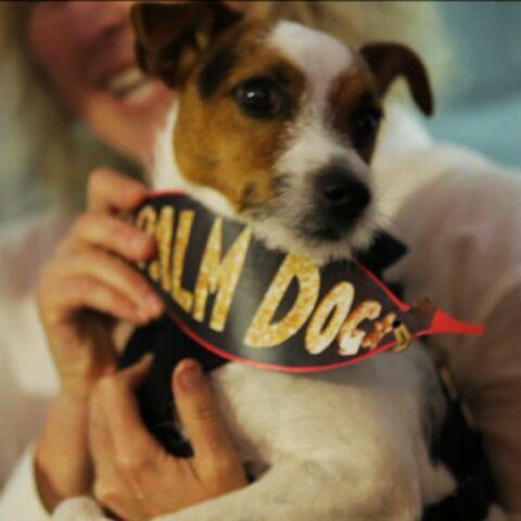 Vidéo- La Palme dog donne du chien à Cannes