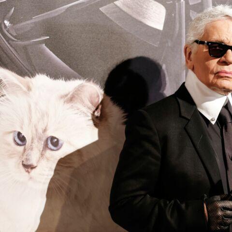 Vidéo – Karl Lagerfeld: «Choupette est mon héritière»