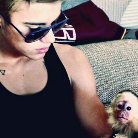 Que cache le singe de Justin Bieber?