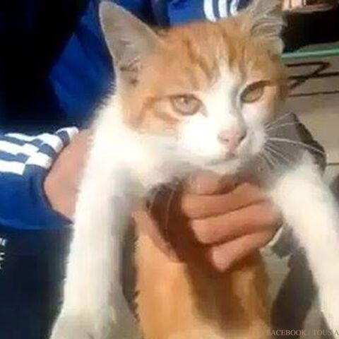 La chanteuse Stone défend Oscar, le chaton qui secoue le web