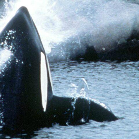 Photos – Les animaux les mieux payés d'Hollywood