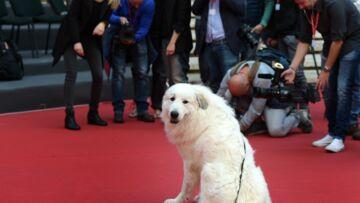 Garfield de Belle et Sébastien: «le Brad Pitt des chiens»