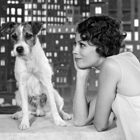 Uggie, le chien de The Artist, est mort
