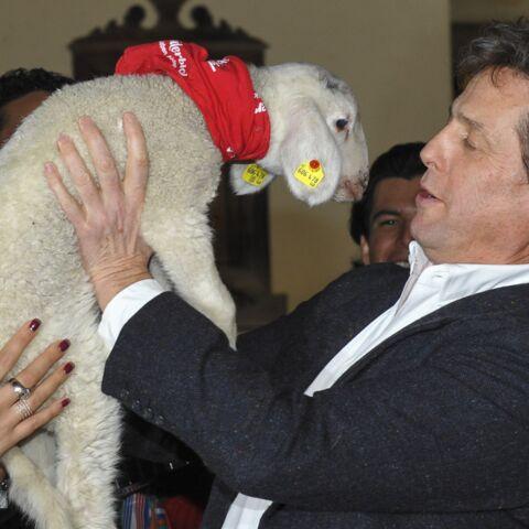 Hugh Grant: sa rencontre avec un agneau et… Alain Delon
