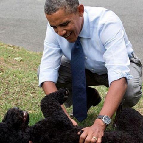 Bo Obama: fidèle compagnon et atout communication