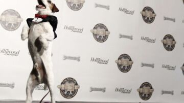 Uggie récompensé à Hollywood