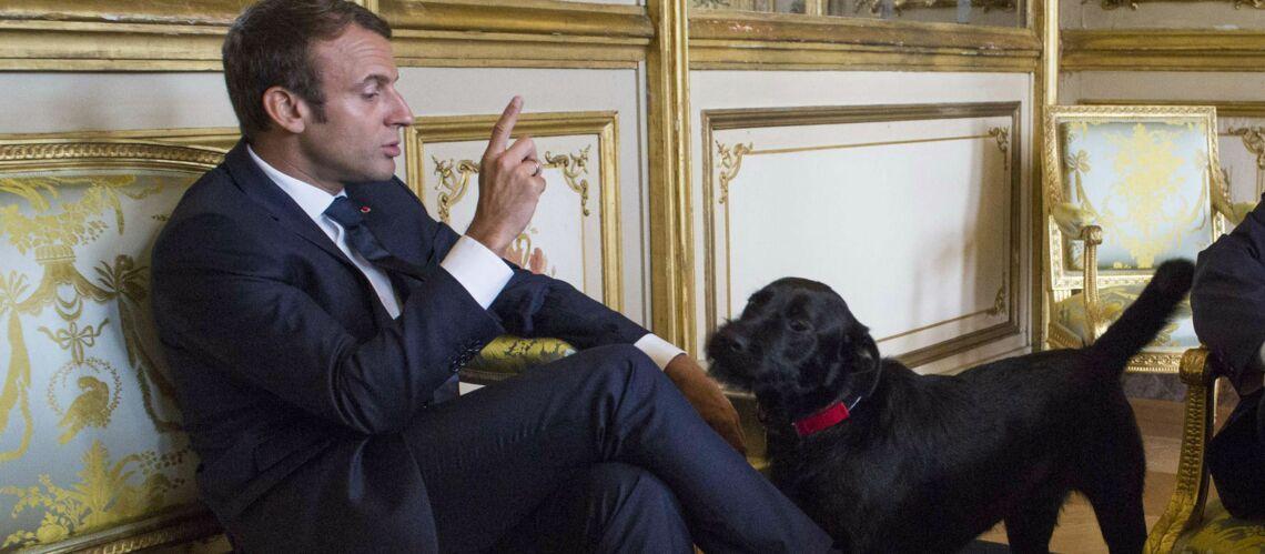 nemo le chien d 39 emmanuel macron a encore fait des siennes ce n 39 est pas le plus duqu au. Black Bedroom Furniture Sets. Home Design Ideas
