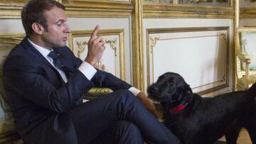 Nemo, le chien d'Emmanuel Macron, a encore fait des siennes: «Ce n'est pas le plus éduqué au monde»