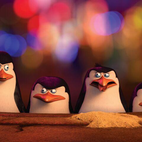 Les pingouins de Madagascar: ni tout noir, ni tout blanc **