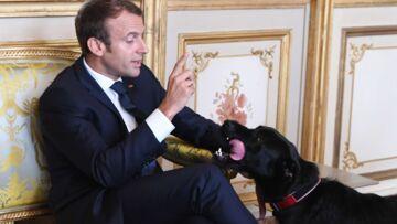 Emmanuel Macron est «comme un gosse» avec son chien Nemo