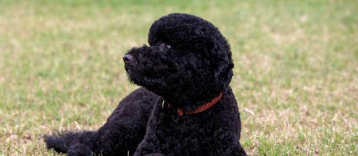 Les Obama adoptent un nouveau chien
