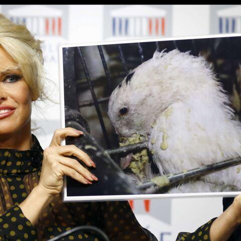 Vidéo – Pamela Anderson, émeute à l'Assemblée nationale