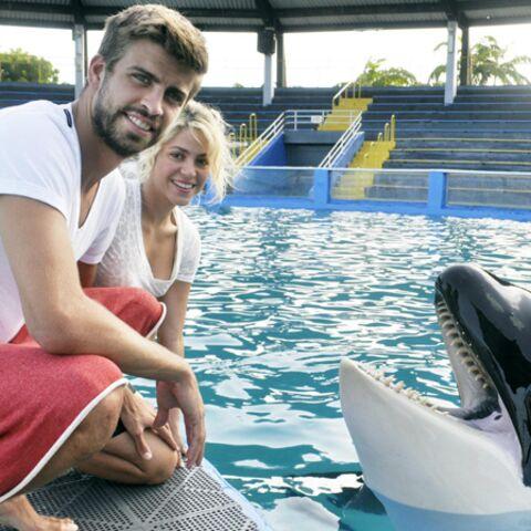 Photos- Shakira et Gerard Piqué adoptent… un orque