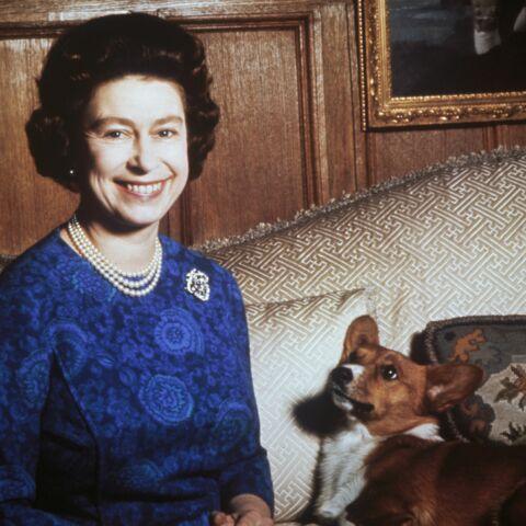 Elizabeth II et les corgis, c'est fini