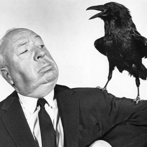 Michael Bay s'attaque à un remake des Oiseaux d'Hitchcock