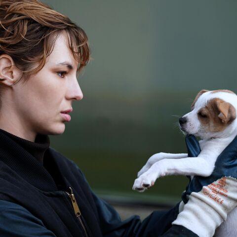 Je suis un soldat: Louise Bourgoin lâche les chiens ***
