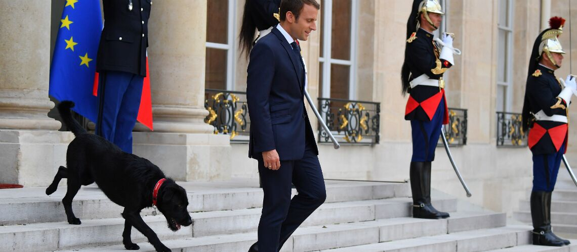 Quand Nemo le chien du président fait pipi sur la cheminée de l'Élysée: Emmanuel Macron a encore du boulot pour éduquer son chien