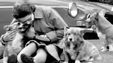 A la table des chiens de la Reine d'Angleterre