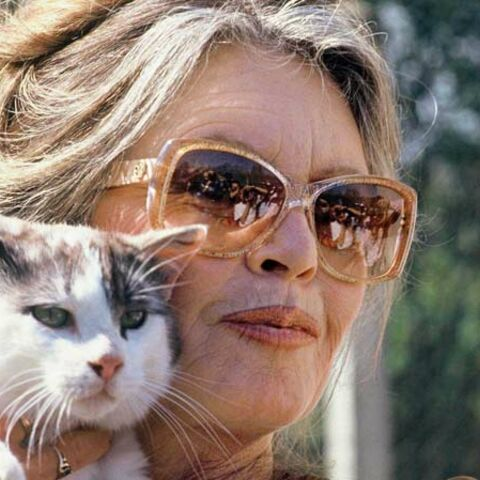 Brigitte Bardot câline à nouveau sa chatte